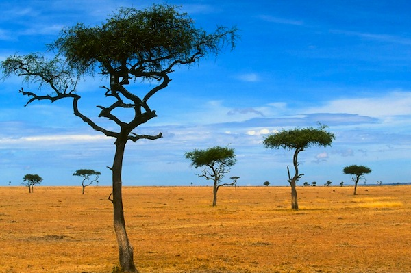 2013/01/World_Africa_Scattered_Acacia_Trees___Kenya___Africa_008882_.jpg